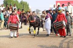 Dancingowy koń z bębenów rytmami Zdjęcia Stock