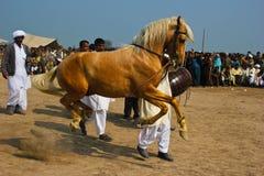 Dancingowy koń zdjęcie royalty free