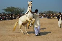 Dancingowy koń obraz stock