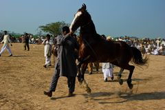 Dancingowy koń zdjęcia stock