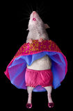 dancingowy szczur Obraz Stock