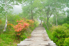 Dand Rengetsutsuji de sentiers de randonnée Photographie stock