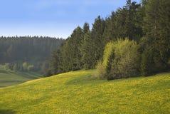 dandelion łąka Zdjęcia Stock