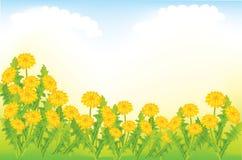 dandelion łąka Zdjęcie Royalty Free