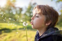 Dandelion życzenia dziecko zdjęcia royalty free
