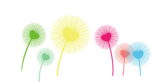 Dandelion. Seeds being blown in the wind Royalty Free Stock Photo