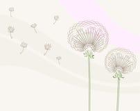 Dandelion. Vector illustration of dandelions, background Stock Images