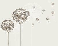 Dandelion. Vector illustration of dandelions, background Stock Photo