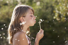 Dandelion. Young girl blowing a dandelion stock images