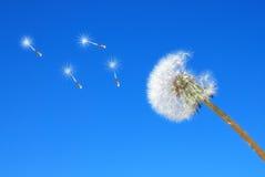 Dandelion. Isolated on the sky Stock Photos