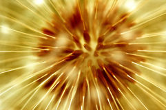 Dandelion. A painted macro of a dandelion blossom Stock Images
