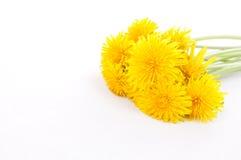 Dandelion Stock Photos