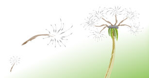 Dandelion. A picture of dandelion and fluffy stock illustration