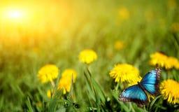 Free Dandelion Royalty Free Stock Image - 21615526