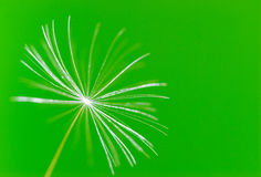 Dandelion. Seed of a  dandelion over green  background Stock Images