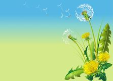 Dandelion. Rasterized Vector Illustration. Horizontal  Illustration with Copy Space on the Left Side Royalty Free Stock Photography