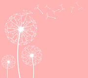 Dandelion. The  dandelion on a wind loses the integrity Royalty Free Stock Photography
