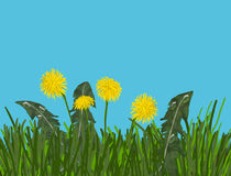 Dandelion. On the meadow in the morning Stock Photo