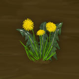Dandelion. On the meadow in the morning Royalty Free Stock Photo