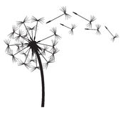 Dandelion stock illustration