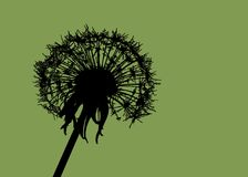 Dandelion. A  dandelion clock on a green background Stock Images