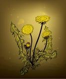 Dandelion. Illustration of medicinal plant dandelion Stock Photography