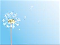 Free Dandelion Royalty Free Stock Photography - 4708777