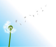 Dandelion. Blowing to the sky, vector illustration vector illustration