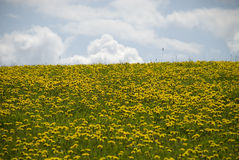 Dandelion #5 Royalty Free Stock Photography