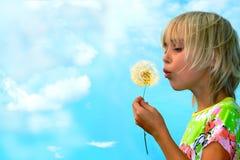 Dandelion. Little girl blows on a seedy pod plant as seeds drift off Stock Photos