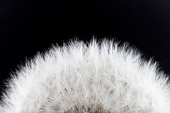 Dandelion abstract Stock Image