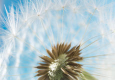 Dandelion abstract blurred background. White blowball over blue sky. Shallow depth of field stock photo