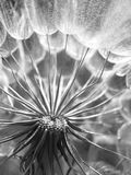Dandelion. Abstract closeup, tranquil art scene Stock Photo