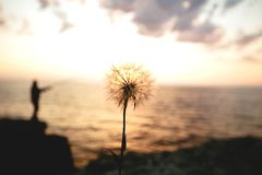 Dandelion on sunset background. royalty free stock images