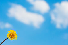 Dandelion against the sky Stock Photography