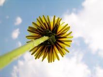 Dandelion against sky Royalty Free Stock Image