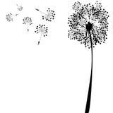 Dandelion against white Royalty Free Stock Image