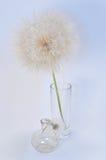dandelion ampuła Zdjęcie Stock