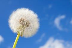 dandelion błękitny niebo Zdjęcia Stock
