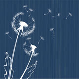 Dandelion background Stock Photography