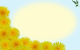 Dandelion background. Sunny dandelions form a frame for your message Royalty Free Stock Photo