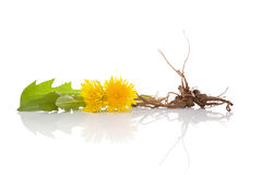 Dandelion background, herbal remedy. Stock Photo