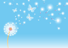 Dandelion background Stock Image