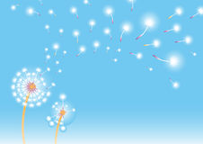 Dandelion background Royalty Free Stock Photo