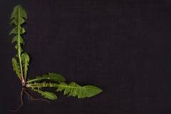 Dandelion background. stock photos