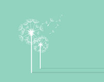 Dandelion Background. Retro Concept Vector Illustration Royalty Free Stock Images