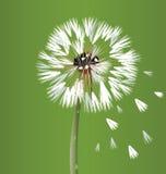 Dandelion blossom flower royalty free illustration