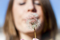 Dandelion Blow Stock Photos