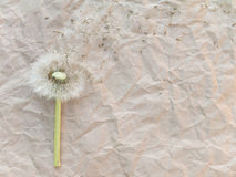 Dandelion blowball Royalty Free Stock Images