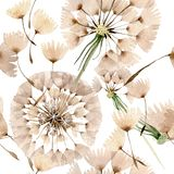 Dandelion blowball with seeds. Watercolor background illustration set. Seamless background pattern. royalty free illustration